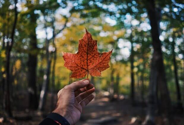 kanada zamyka elektrownie węglowe tylko te z przechwytywaniem pozostaną Trudeau likwidacja zamykanie energetyka