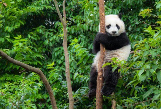 Najwięksi truciciele - Chiny i Indie - najbardziej spowalniają zmianę klimatu