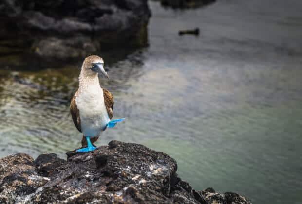 mlekomaty ptaki wielka brytania plastik