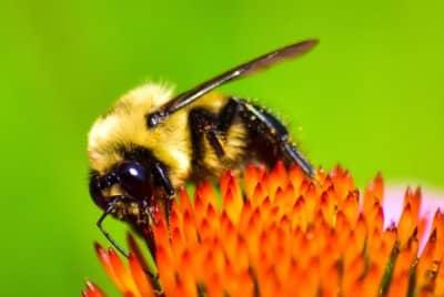 Masowe wymieranie owadów. Jak powstrzymać apokalipsę
