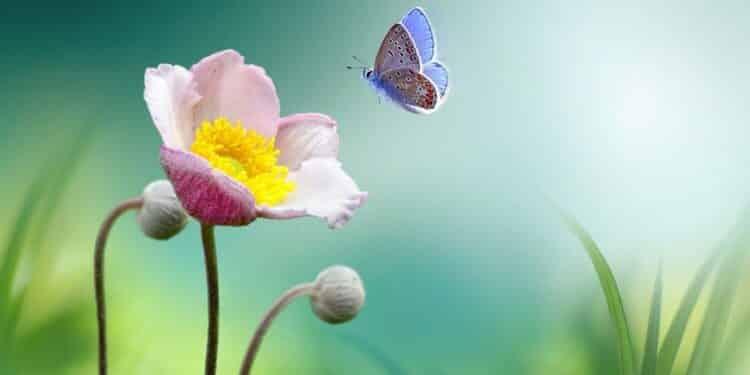 W Holandii znikają motyle. Jest ich 84 proc. mniej niż przed 130 laty