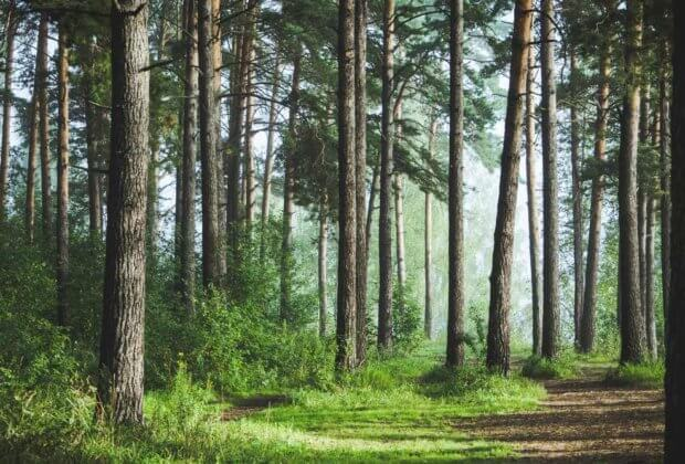 Lasy Państwowe przy okazji Dnia Długu Ekologicznego chwalą się lesistością kraju