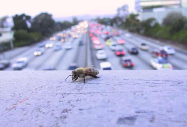 pszczela autostrada londyn pszczoły