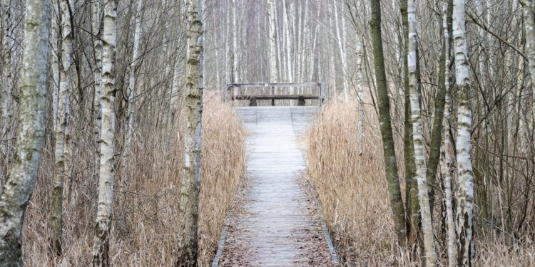 Via Carpatia Biebrzański Park Narodowy Shutterstock