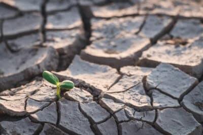 Bioróżnorodność może pomóc uchronić uprawy przed wpływem suszy