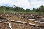 amazonia wycinka bolsonaro