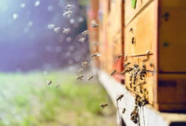 Badanie farmy wiatrowe nie szkodzą pszczołom