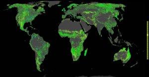 Miliard hektarów lasów by uratować świat mapa