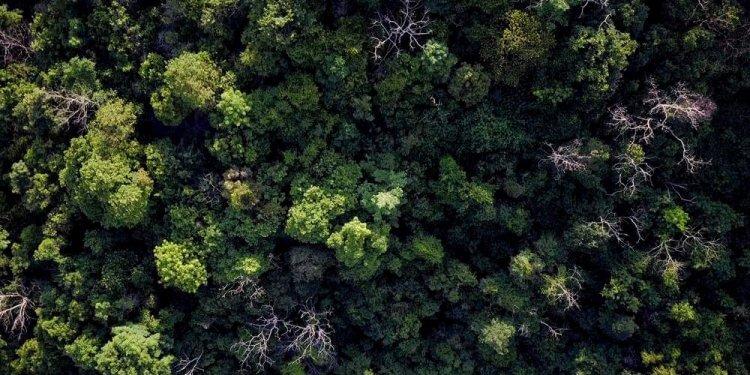 Miliard hektarów lasu, by uratować świat