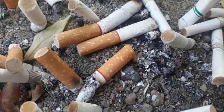 Niedopałki papierosów zatruwają glebę i ograniczają wzrost roślin