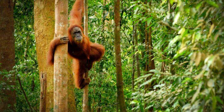 Produkcja biodiesla przyczynia się do karczowania lasów tropikalnych Paradoksalny skutek powiązań rynkowych