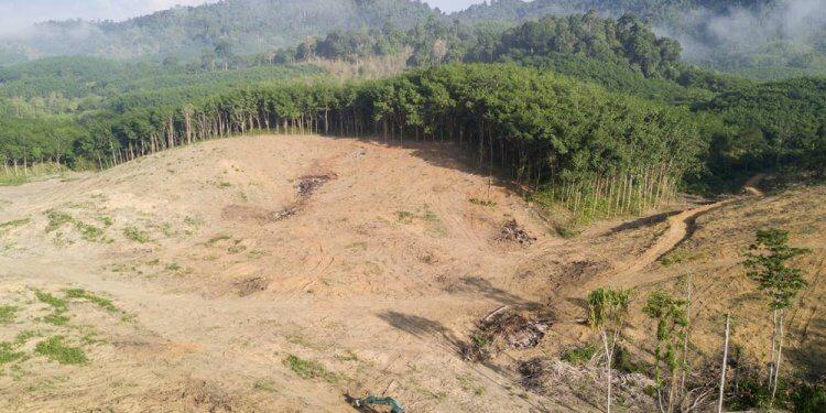 Wycinka w Amazonii pogłębia wymieranie tamtejszych gatunków. Zwiększa również ryzyko pożarów