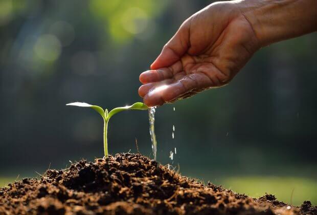 Etiopia Sadzenie Drzew