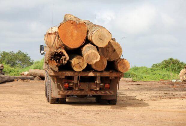 Dyrektor rządowej agencji, która ujawniała wycinkę lasów Amazonii, już nią nie kieruje