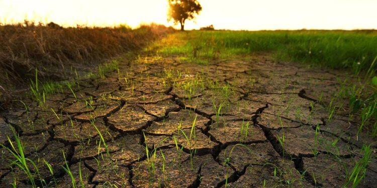 Komentarze do raportu IPCC. To, co jemy i w jaki sposób to jest produkowane, to pole bitwy