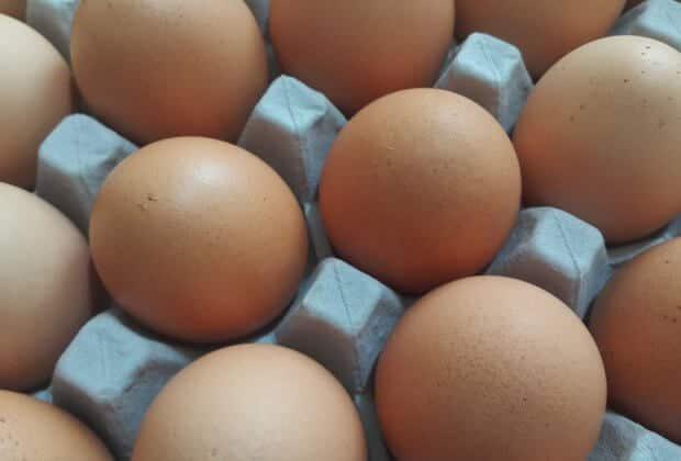 Porzucił w lesie kilkanaście tysięcy jaj, za utylizację zapłacimy my wszyscy. Jajcarza poszukuje Straż Leśna