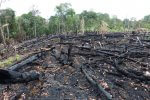 Rekordowa seria pożarów w lasach Amazonii. Dym przyćmił niebo nad São Paulo #PrayForAmazonia
