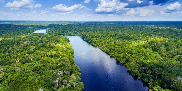 Puszcza Amazońska Bolsonaro Wycinki
