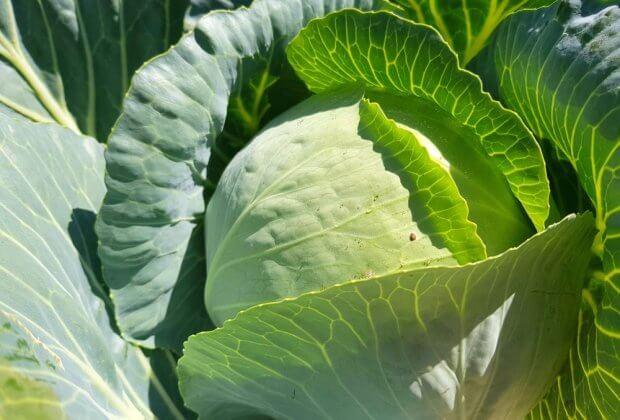 Na dachu szpitala otworzono ogródek. Dzięki niemu pacjenci jedzą świeże warzywa