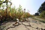 Unijna agencja przewiduje spadek produkcji rolnej, a gdzieniegdzie jej zawieszenie. Nadchodzą skutki zmian klimatu