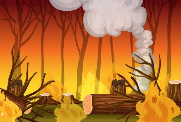 Amazonia pożary prawda