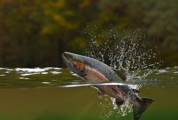 Australia ewakuuje ryby z powodu nadchodzącej suszy. Współczesna Arka Noego