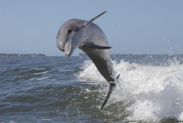 Tripadvisor bojkotuje miejsca, gdzie ogląda się delfiny oraz wieloryby żyjące w niewoli