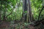 W Amazonii pożarów jest znacznie mniej, ale wciąż zagraża jej wycinka