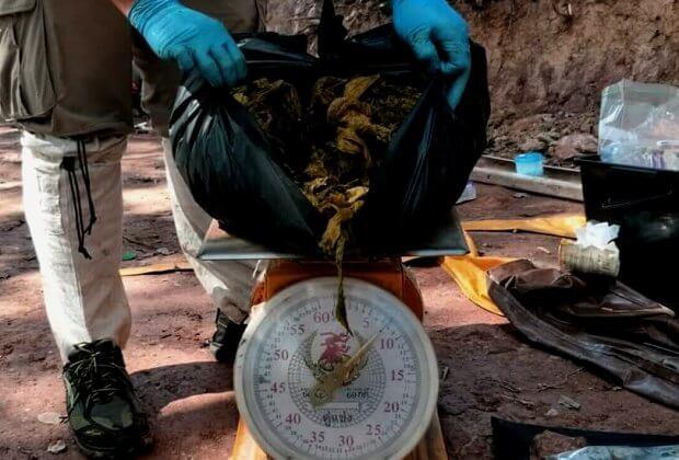 7 kg śmieci miał w żołądku jeleń z parku narodowego w Tajlandii. Plastik, odpady i męskie bokserki