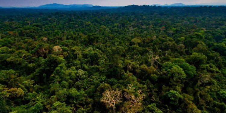 W Amazonii zniknęło dwukrotnie więcej drzew niż przed rokiem