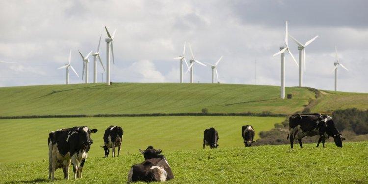 Wielka Brytania Rekordowy udział OZE odnawialnych źródeł w miksie energetycznym