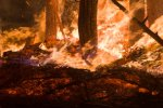 Miliard zwierząt padło ofiarą ognia w Australii. Opublikowano nowe dane dotyczące skutków pożarów