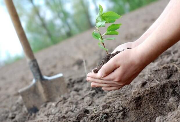W Turcji pobito rekord w sadzeniu drzew. Po kilku miesiącach okazuje się, że nie przeżyło nawet 90 proc. sadzonek