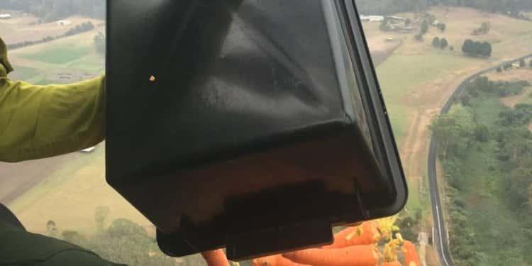 marchewki z powietrza marchewki australia pożary buszu zwierzęta