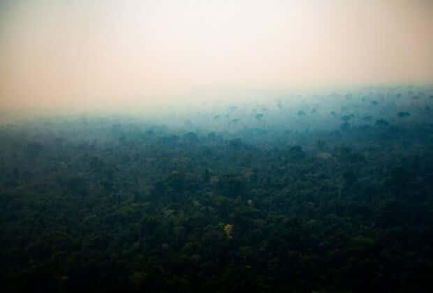Wylesianie Amazonii nie hamuje. W Brazylii zniknęło dwukrotnie więcej drzew o 108 proc wiecej drzew deforestacja amazonii wylesienie
