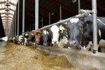 mięso podatek UE