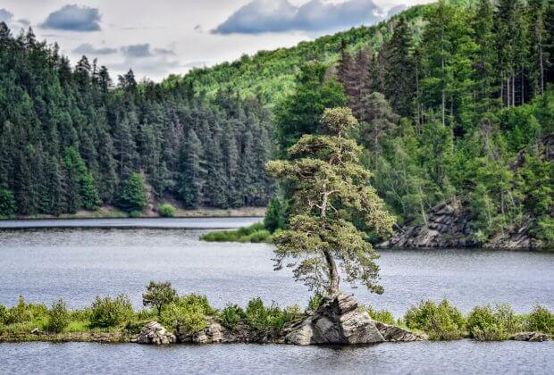 europejskie drzewo roku