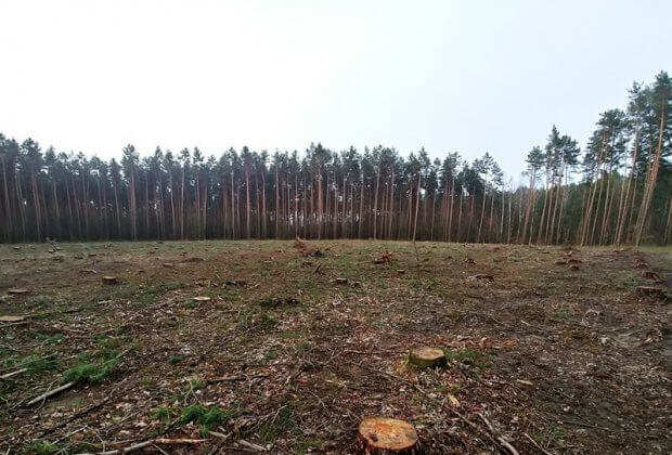 las szczecin