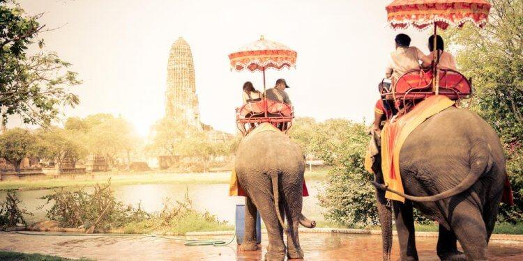 Słoniom w Tajlandii grozi głód. Pandemia uderzyła w turystykę