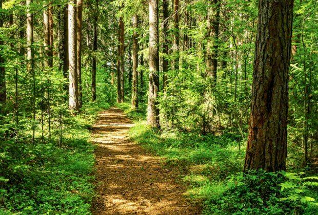 las zakaz wstępu