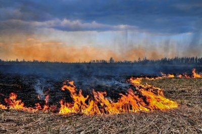 wypalanie traw kary