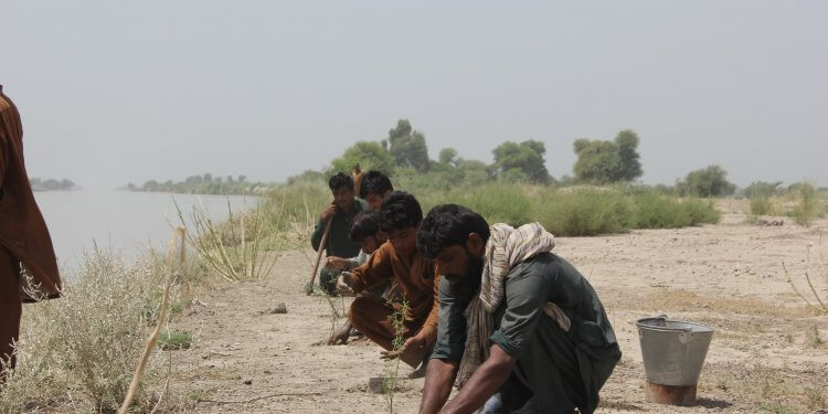 Pakistan 10 miliardów drzew