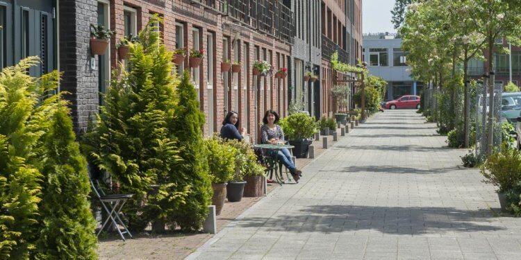 Rośliny będą częściej pojawiać się w mieście