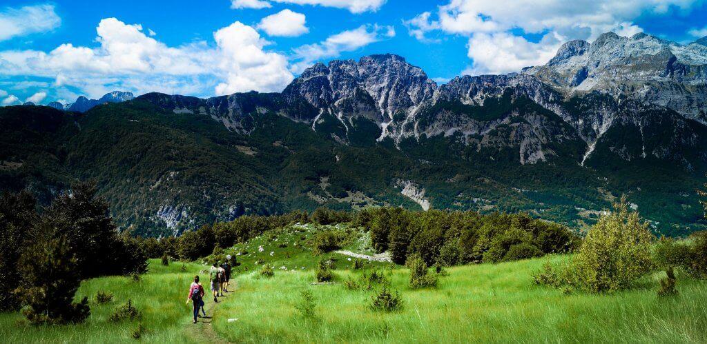 zbiory miodu miodobranie albania