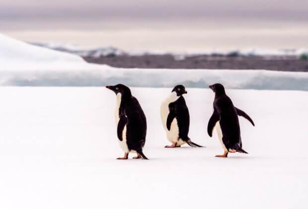 Antarktyda lotnisko