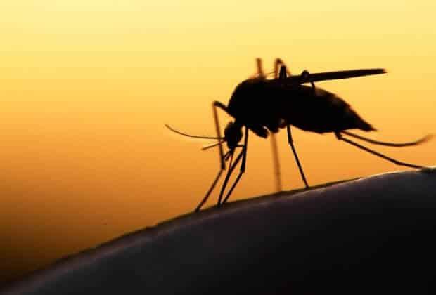komary koronawirus