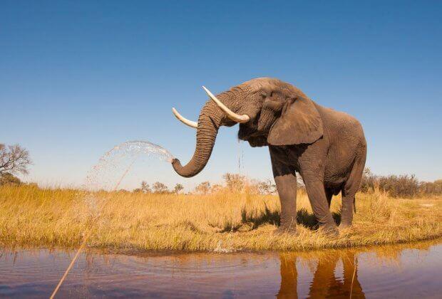 słoń nad wodą
