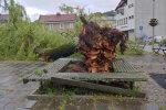 drzewo mszana dolna