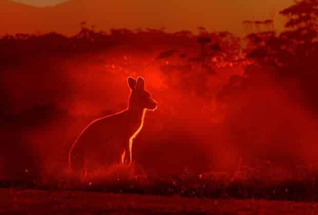 kangury w ogniu