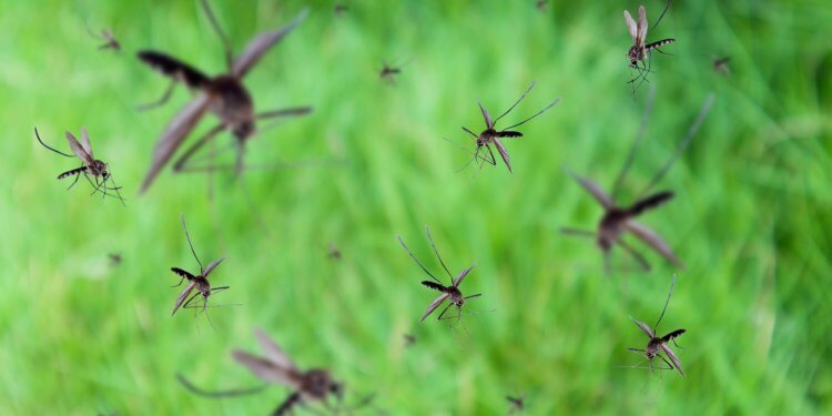 komary jak walczyć